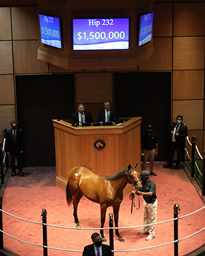 hip 232 quality road filly fasig-tipton