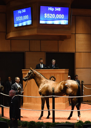 The July Sale Hip 348