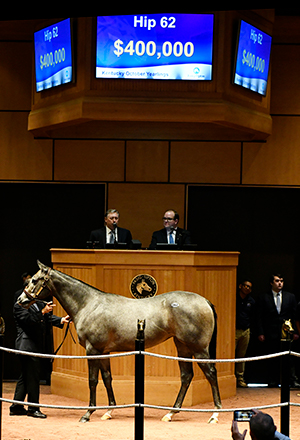 fasig tipton kentucky october yearlings hip 62 medaglia d'oro filly